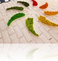 A2 sigla Iulius  mall -  licheni colorati