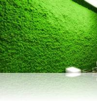 A5. perete decorat cu licheni licheni