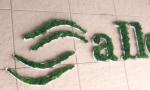 A18. litere umplute cu licheni